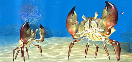 Sea Life Safari